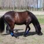 Polsterbandage für Pferde/Pferdebandagen kaufen